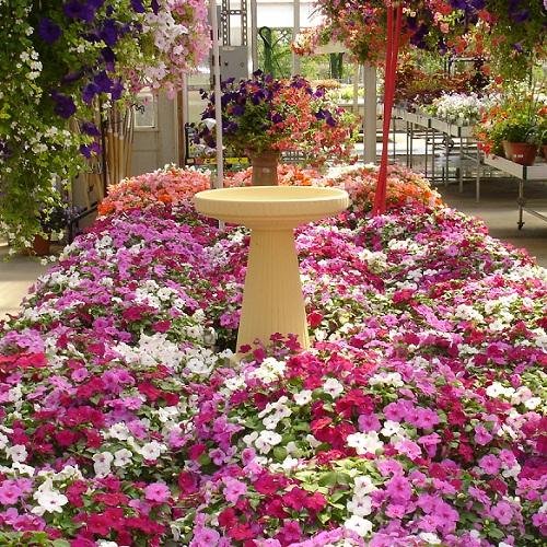 Jai Ambamata Nursery Flowers Decoration